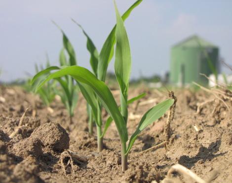 L'agricoltura ha paura dei robot?