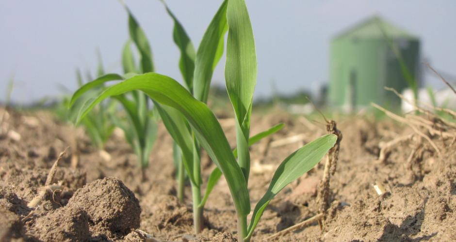Quale futuro per l'agricoltura ?