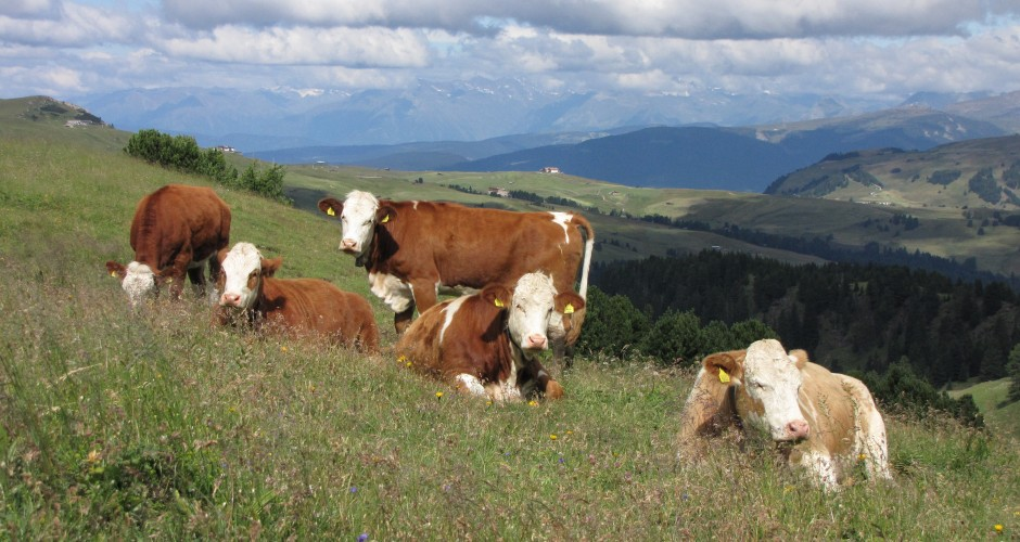 I benefici per la salute dell'allevamento a erba GrassFed