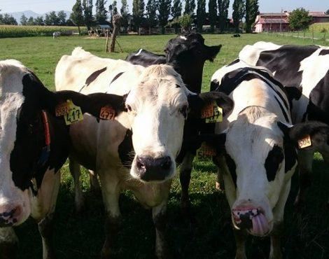 consegne latte regione lombardia