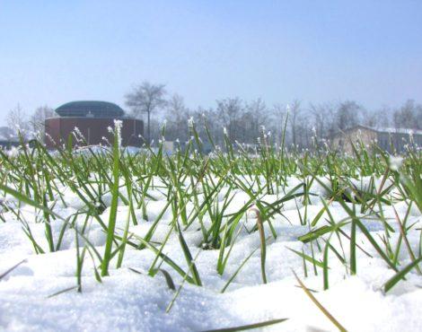 La caccia alle streghe sul biogas agricolo