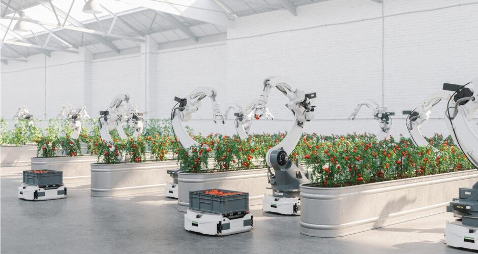 E' questa serra gigante robotizzata in Kentucky il futuro dell'agricoltura?